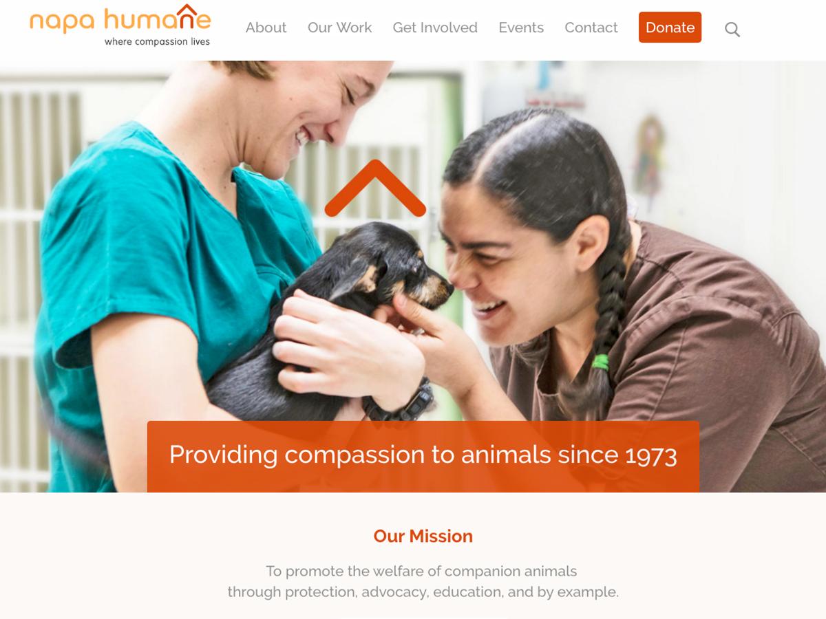 NHS Compassion